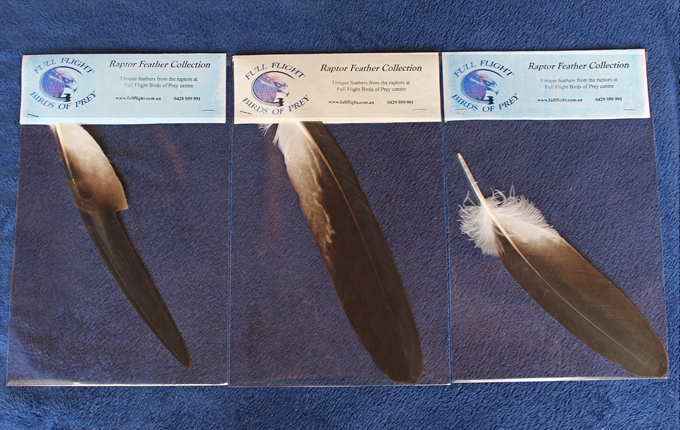 Wedge-tailed eagle feather packs