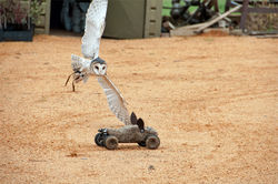 Falconry Encounter   Voucher