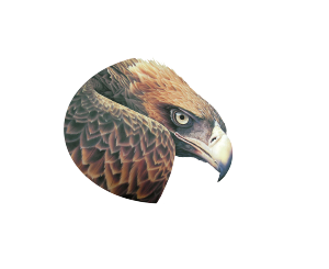 Full Flight Birds of Prey